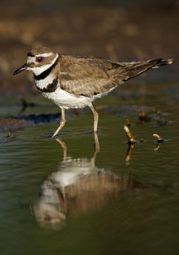 Должно пройти несколько десятков лет, чтобы прежнее озеро Оуэнс снова стало пригодным для жизни и восстановило свою экосистему. Фото: David McNew/Getty Images