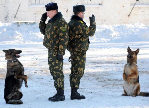 Собаки белорусских пограничников стоят по стойке смирно. Сморгонь, 130 км к северо-западу от Минска, 22 января 2009 года. Фото: Виктор Драчев / AFP / Getty Images)