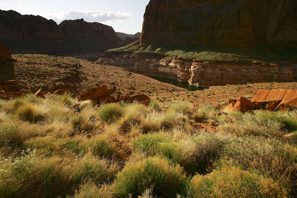 Растение среди красного песчаника скал. Фото: David McNew/Getty Images
