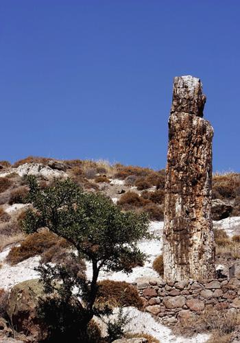 Окаменелый лес в западной части острова Лесбос в Греции – один из наибольших, его площадь составляет 150 км2. Фото: ARIS MESSINIS/AFP/Getty Images