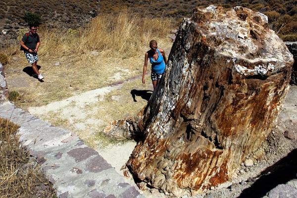 Окаменелый лес в западной части острова Лесбос в Греции – один из наибольших, его площадь составляет 150 км2. С 1985 года он имеет статус природного памятника.Фото: ARIS MESSINIS/AFP/Getty Images