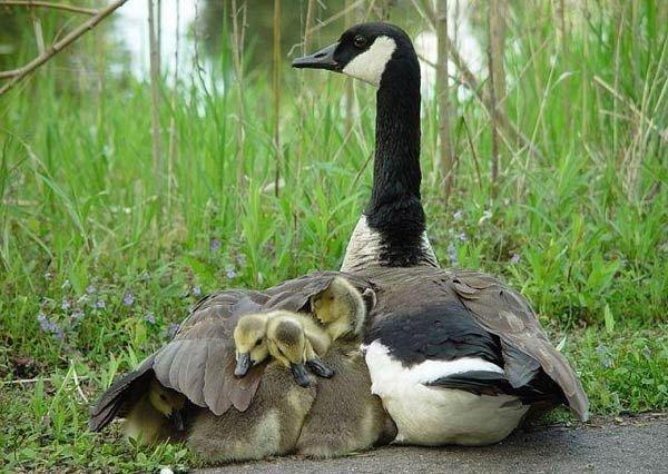 Мгновения жизни. фото с ntdtv.com