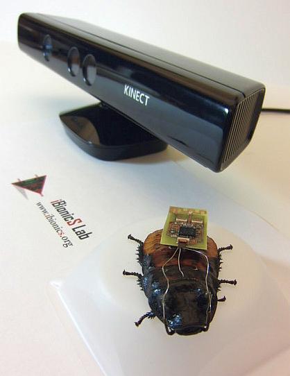 Радиоуправляемые тараканы помогут спасателям искать людей
