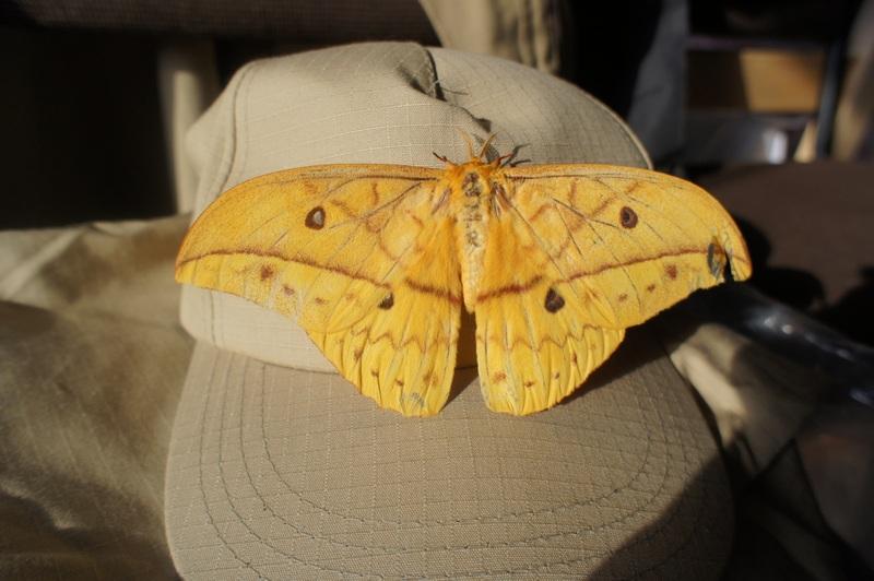 Ночная бабочка. Фото: Александр Африканец