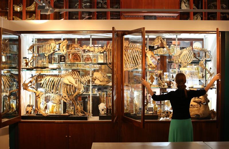 Лондон, Англия, 4 сентября. Сотрудник Большого музея зоологии проверяет экспонаты, которых насчитывается свыше 67 тысяч. Фото: Peter Macdiarmid/Getty Images