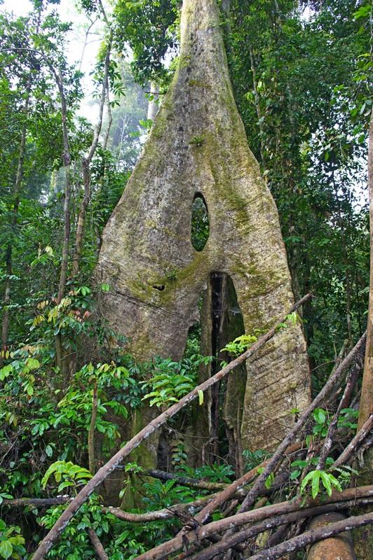 Гигантские деревья 30—40 метров. Фото: Александр Африканец