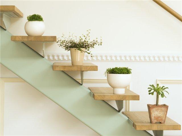 Какие комнатные растения лучше всего способны улучшить микроклимат помещения? Фото: kogda-remont.ru
