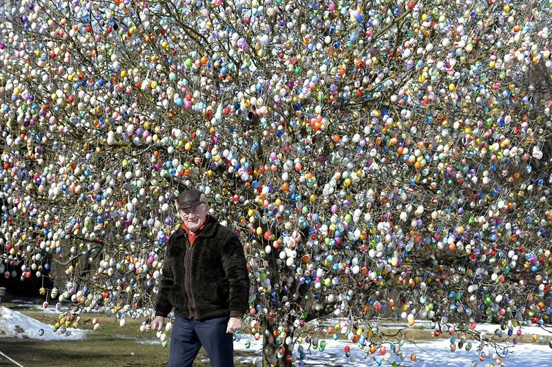 Заальфельд, Германия, 24 марта. Фолькер Крафт вместе со своей семьёй нарядили яблоню 10 тысячами «пасхальных яиц». Фото: Thomas Lohnes/Getty Images