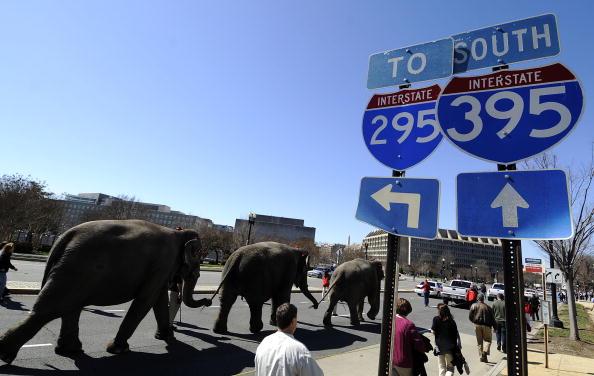 Парад слонов у Капитолийского Холма в Вашингтоне. Фоторепортаж. Фото: JEWEL SAMAD/AFP/Getty Images
