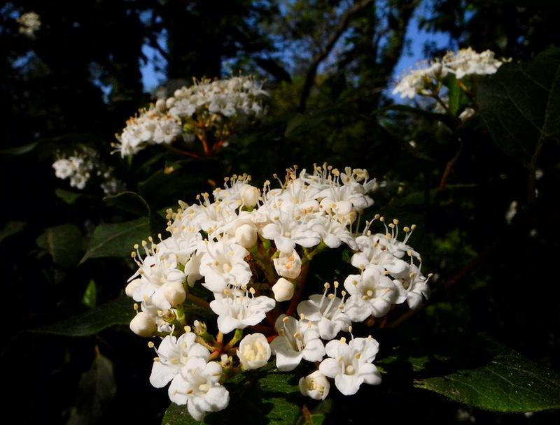 Весна в Ливадийском парке. Фото: Алла Лавриненко/Великая Эпоха