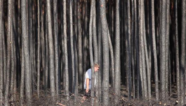 Мужчина идет по сгоревшему лесу на окраине Воронежа 31 июля 2010 года. Фото: Alexey SAZONOV/AFP/Getty Images