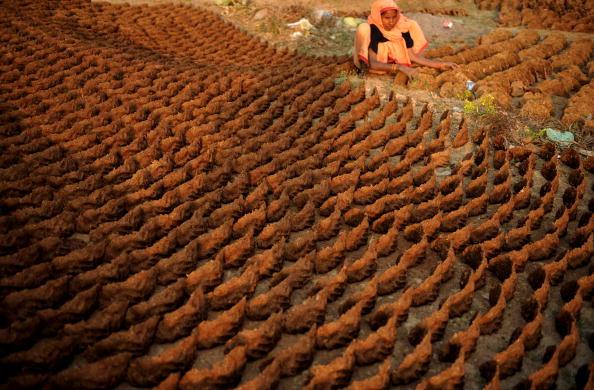 Женщина сортирует высушенный навоз. Это является альтернативным источником электричества в Индии на замену дровам. Фото: DIPTENDU DUTTA/AFP/Getty Images