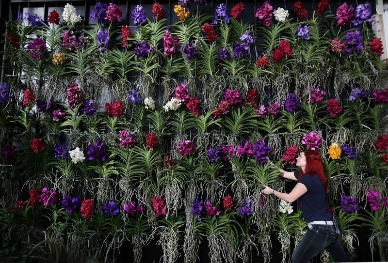 Лондон, Англия, 7 февраля. В Королевских ботанических садах Кью проходит выставка орхидей, на которой представлены более 4550 орхидей, 550 бромелий и 350 цветочных композиций. Фото: Peter Macdiarmid/Getty Images