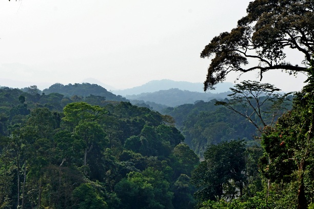 Джунгли. Фото: Александр Африканец