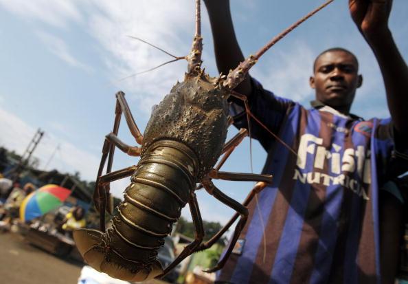 Уличный продавец омаров в небольшом порту Кабинды, Ангола. 22 января 2010г. Фото Иссофа Санного /AFP/Getty Images