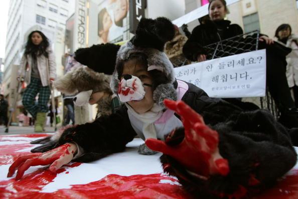 Активисты РЕТА протестуют против использования меха животных. Сеул, Южная Корея. Фото: Chung Sung-Jun/Getty Images