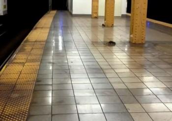 Крыса бежит по станции метро в Нью-Йорке. Кадр из видео на YouTube