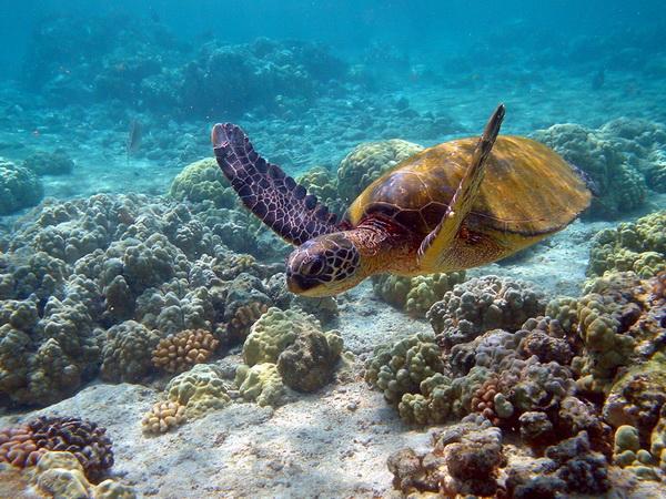 Реферат о жизни в океане 7891