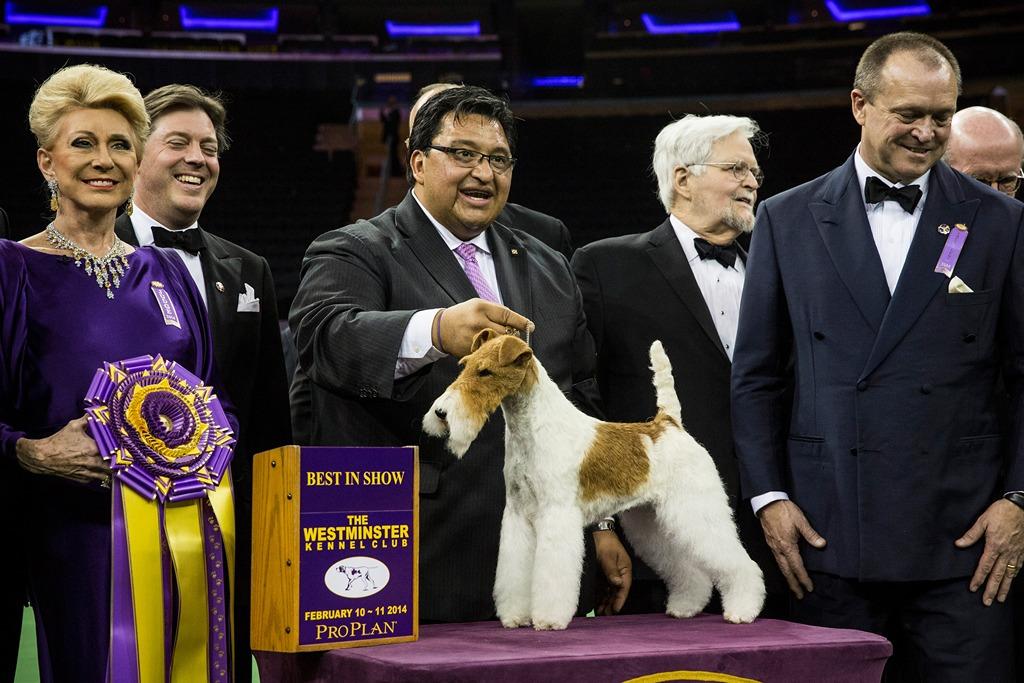 Жесткошёрстный фокстерьер Скай — победитель 138-й Вестминстерской выставки собак. Фото: Andrew Burton/Getty Images