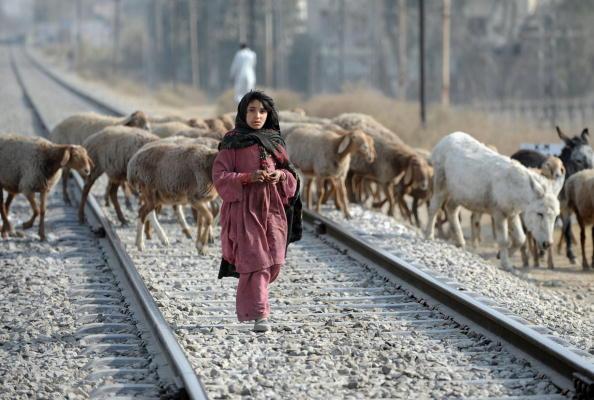Пакистанская девочка пасет стадо овец на железной дороге в Равалпинди. 21 января 2010 года. Фото: Фарук Наим /AFP / Getty Images