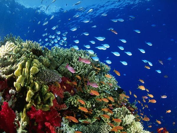 Реферат жизнь в океане по географии 3663