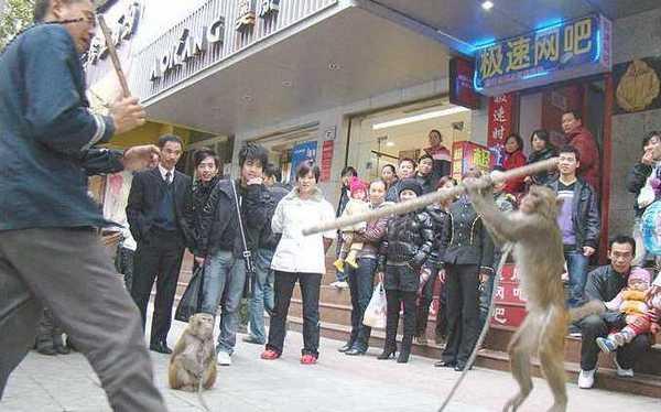 Мартышки напали на своего тренера. Фото: epochtimes.com