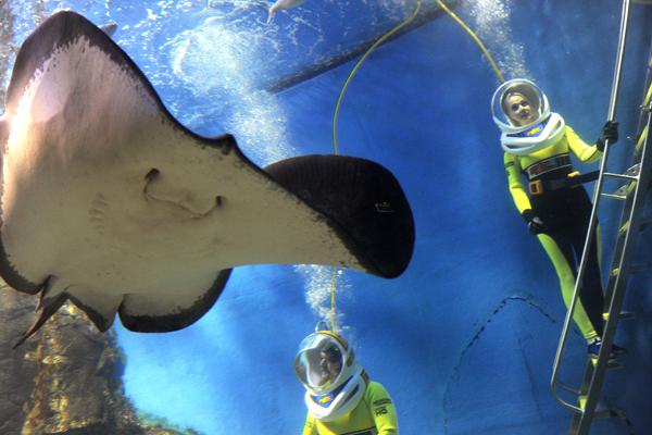 Мельбурн, Австралия. Специальный костюм дайвера позволяет посетителям ходить под водой, окруженными акулами, гигантскими скатами и сотнями рыб. Фото: WILLIAM WEST/AFP/Getty Images