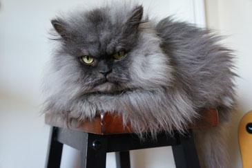 Полковник Мяу. Фото: colonel-meow.com