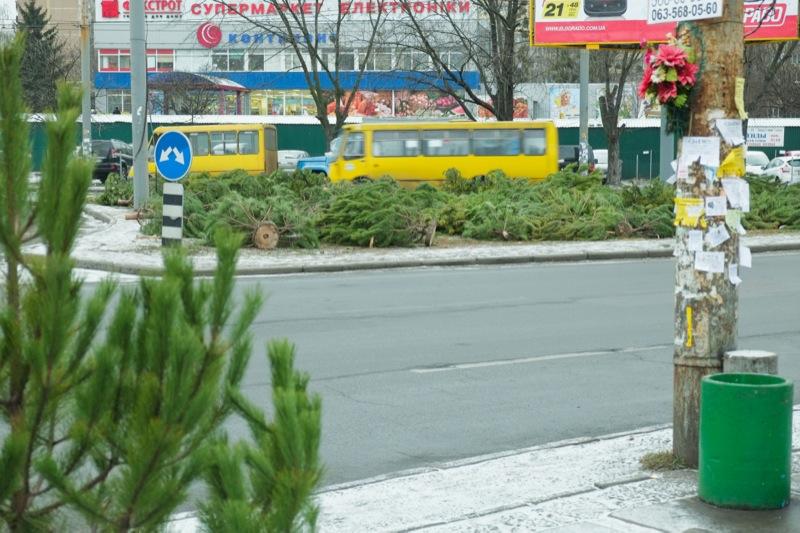 Тысячи нераспроданных ёлок оставляют валяться на улицах. Фото: Фёдор Треногов