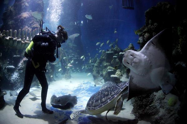 Лондон, Англия. Лондонский аквариум имеет одну из крупнейших в Европе коллекций морских обитателей. Аквариум привлекает около 750000 посетителей в год, а также управляет программой размножения и сохранения животных. Фото: Oli Scarff/Getty Images