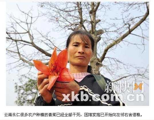 Из-за нехватки еды, люди начинают кушать цветы хлопковых деревьев. Провинция Юньнань. Фото с epochtimes.com