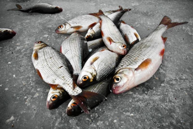Рыбаки ловят рыбу на заливе Собачье устье в Киеве. Фото: Владимир Бородин/Великая Эпоха