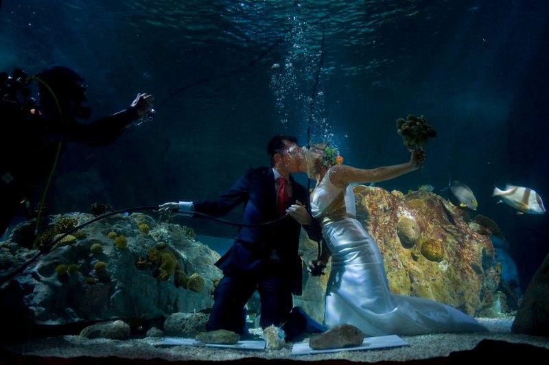 Бенальмадена, Испания, 6 августа. Молодожёны Фран Кальво и Моника Фраиле сыграли свадьбу на дне аквариума «Морская жизнь». Фото: Jorge Guerrero/AFP/GettyImages