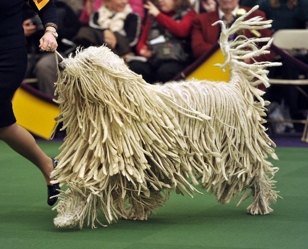 Венгерская овчарка на 138-й Вестминстерской выставке собак. Фото: TIMOTHY CLARY/AFP/Getty Images