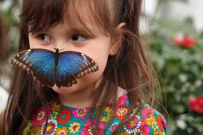 Лондон, Англия, 25 марта. В музее естествознания проходит выставка «Удивительный мир бабочек». Фото: Oli Scarff/Getty Images