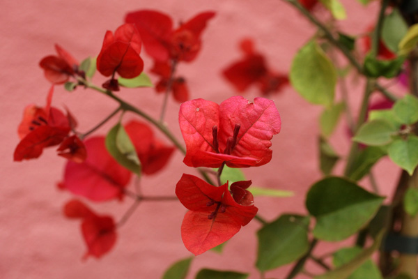 Аккуратно высаженные ряды ирисов, ароматные кусты роз — все это позволяет забыть, что вы находитесь на крыше бывшего универмага. Фото: Oli Scarff/Getty Images