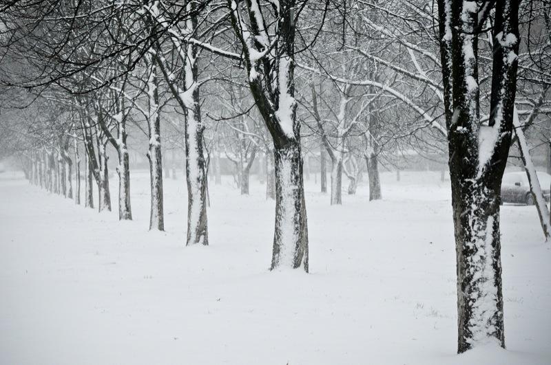 Первый снег в Киеве сопровождался порывистым ветром и налипанием. Фото: Владимир Бородин/Великая Эпоха