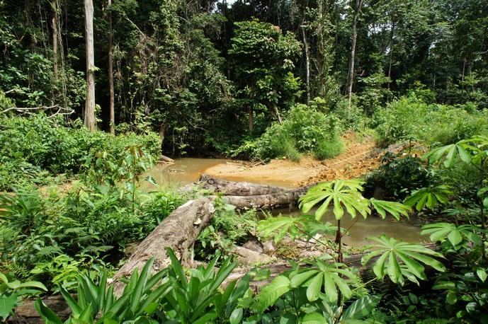Ручей, пересекающий дорогу в джунглях. Фото: Александр Африканец