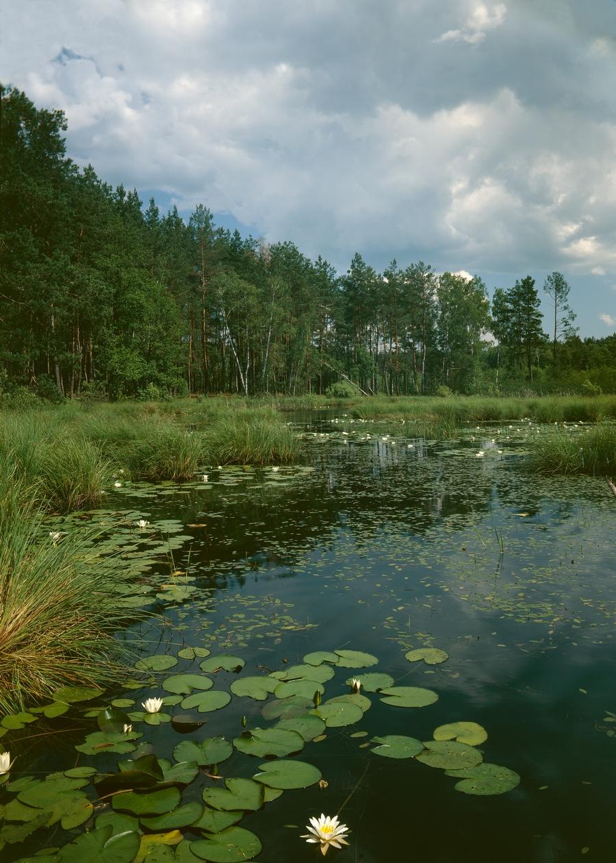 Фото: Анатолий Кривенко