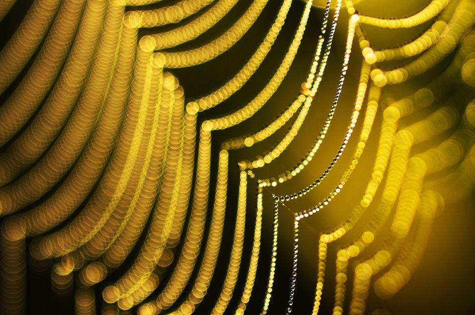 Фото: Джони Ниемела/joniniemela.com