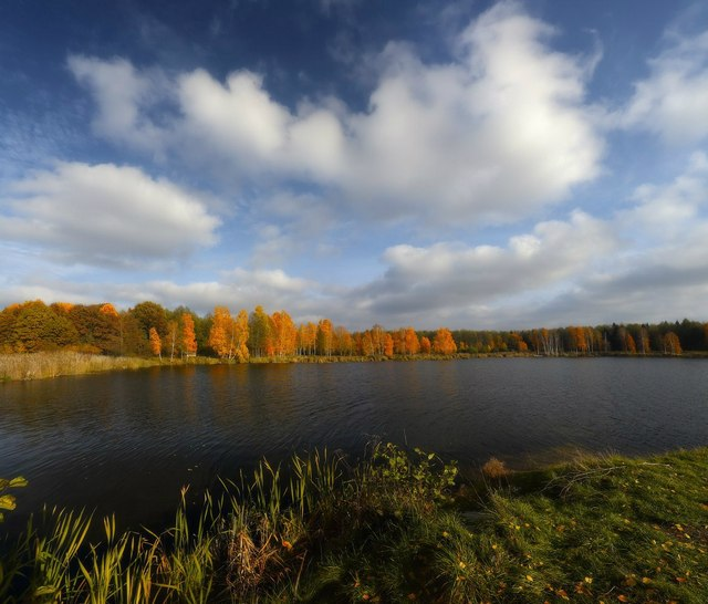 Позолочена осінь. Заплава річки Жигулянка. Фото: Олексій Угальніков, vk.com/albums3554740