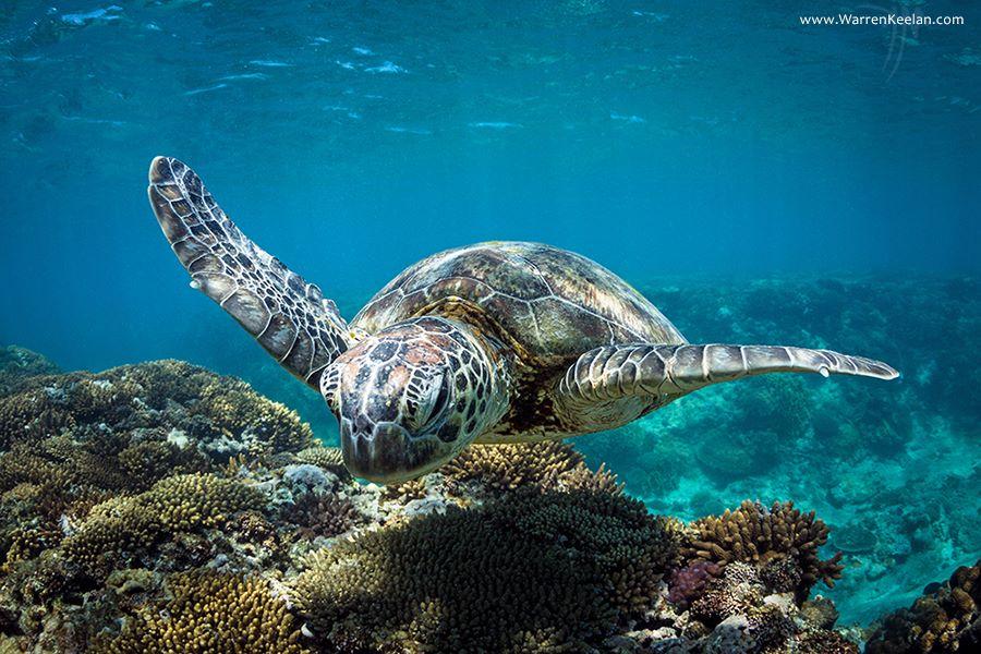 Фото: warrenkeelan.com