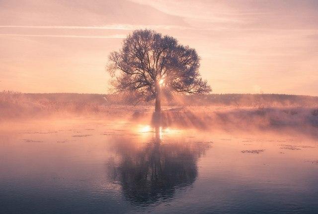 Фрагмент листопада. Світанок. Заплава річки Німан. Білорусь.