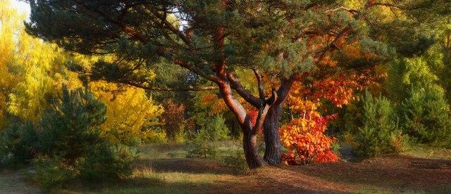 Осенний этюд.Брест.