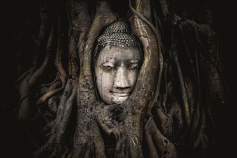 5место. Голова Будды в храме Ват Махатхат, Аютайя, Таиланд. Автор фото — Siripatwongpin, лицензия CC-BY-SA-4.0