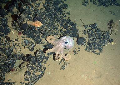Фото: National Oceanography Centre