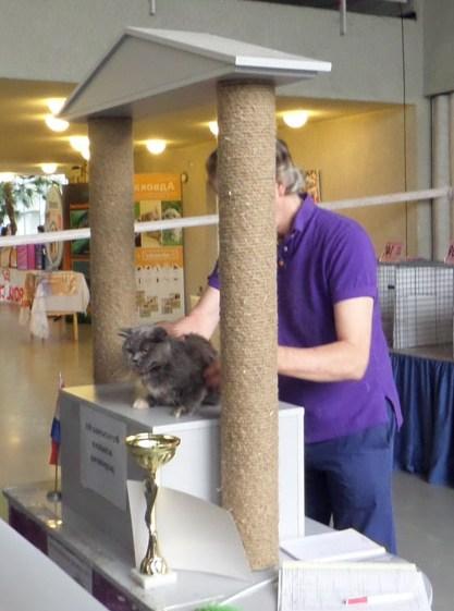 Міжнародна виставка кішок в Києві 20—21вересня 2014 року.Фото: Оксана Богомаз/Велика Епоха