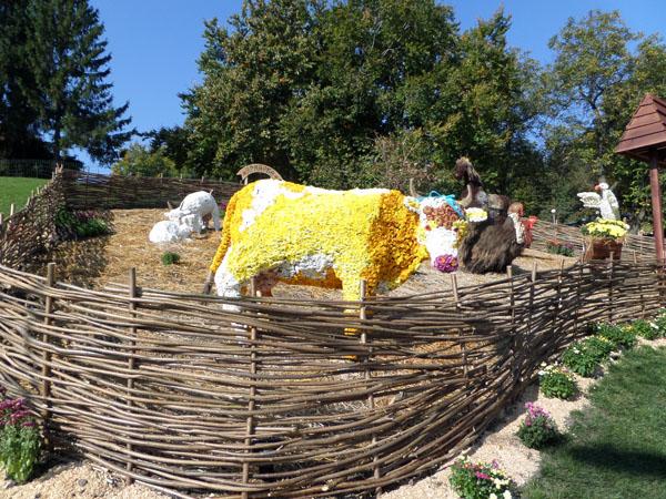 Выставка хризантем проходит в Киеве. Фото: Оксана Богомаз/Великая Эпоха