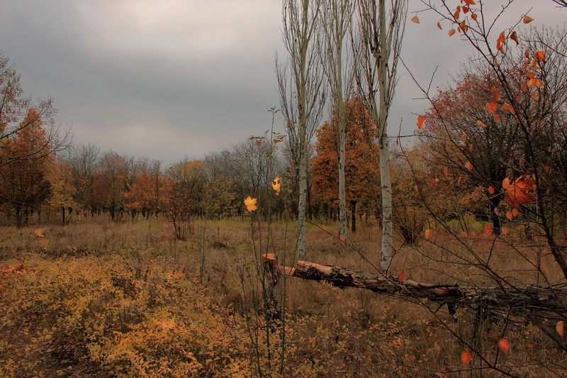 Три поры осени. Фото: Валерия Мирошко/Великая Эпоха