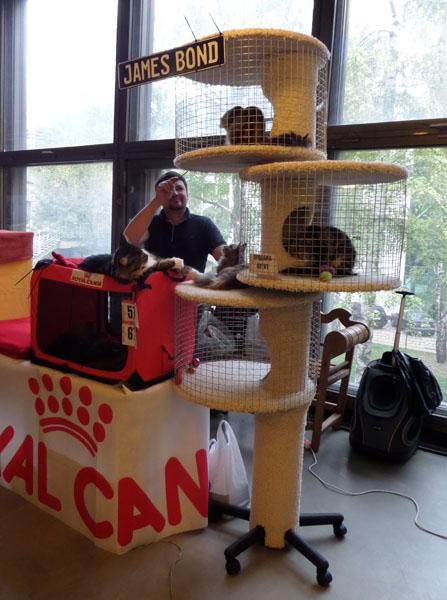 Международная выставка кошек в Киеве 20—21 сентября 2014 г. Фото: Оксана Богомаз/Великая Эпоха
